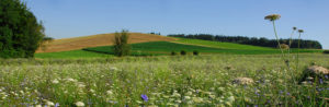 593_lago-garda-colline-moreniche-01